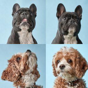 Sydney dog photography